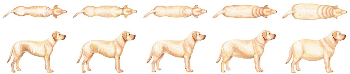 vægt til hunde